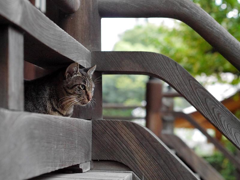 お寺の猫たち2