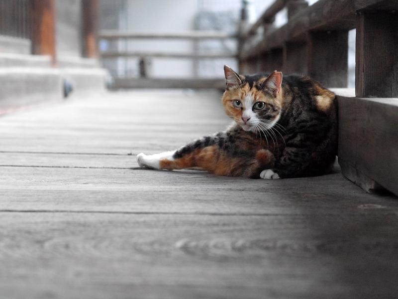 お寺の猫たち3