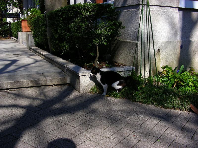 木漏れ日と黒白猫2