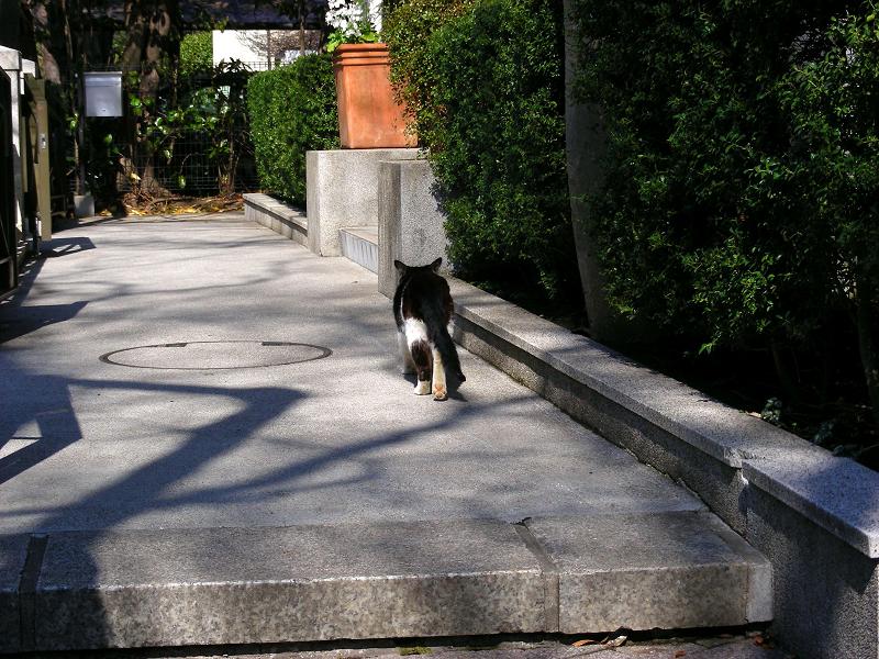 木漏れ日と黒白猫3