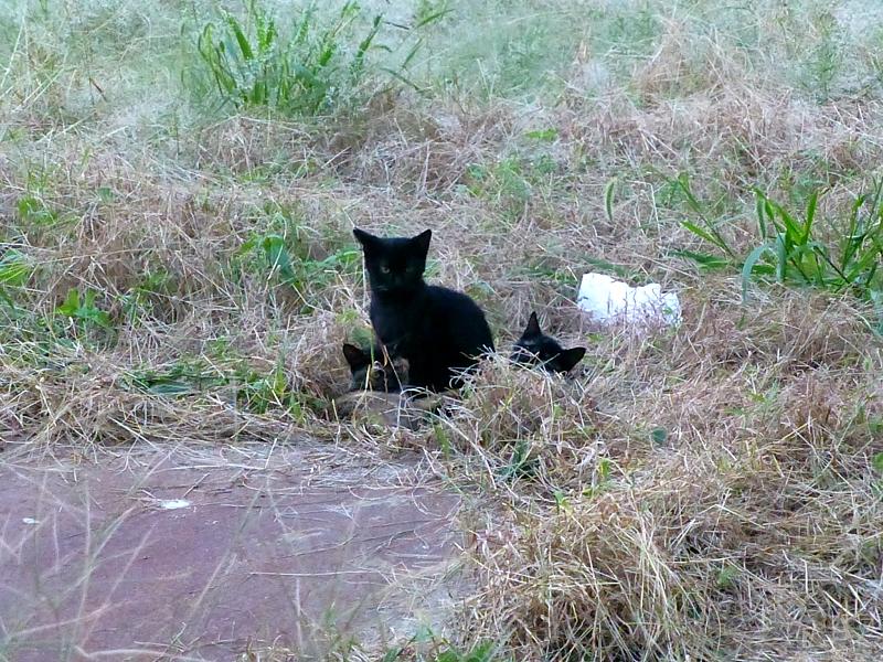 夕暮れの空き地の猫たち3