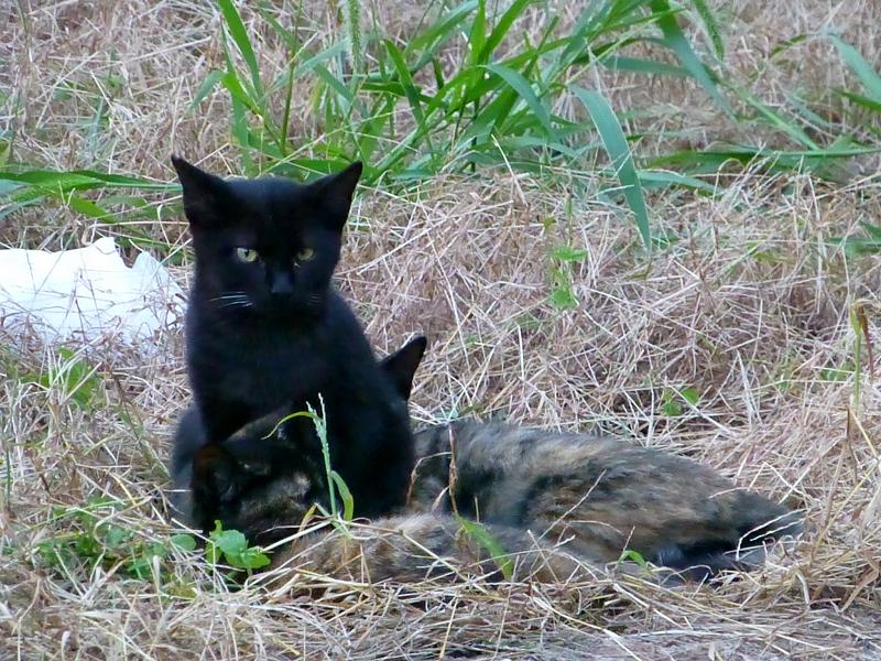 夕暮れの空き地の猫たち4
