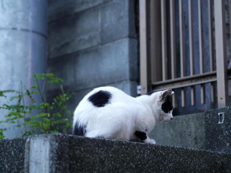 民家前の白黒猫