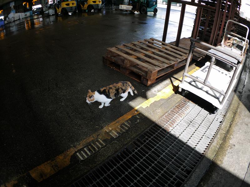 漁港の三毛猫2