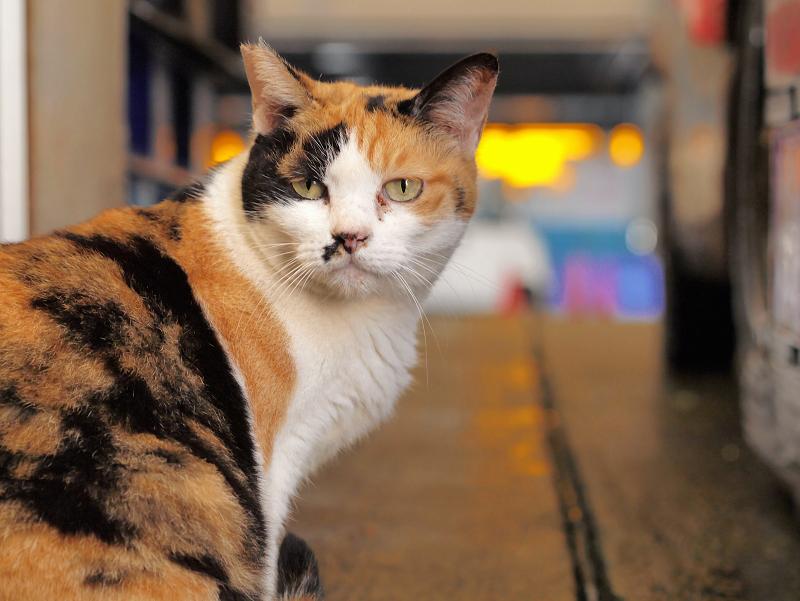 漁港の三毛猫3