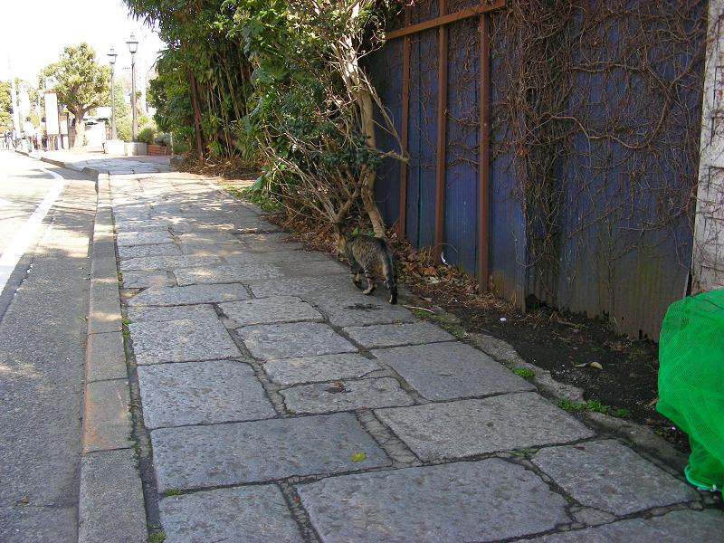 歩いてくキジトラ猫2