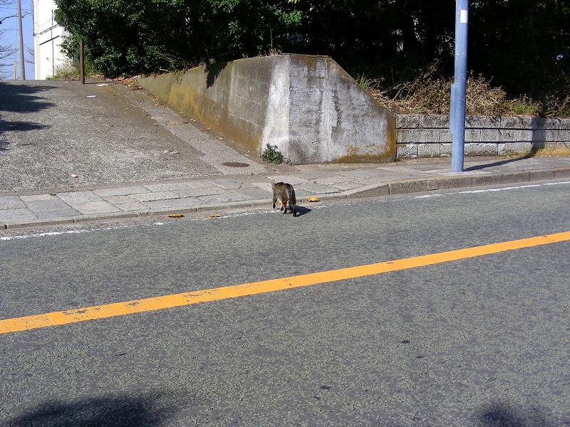 歩いてくキジトラ猫3