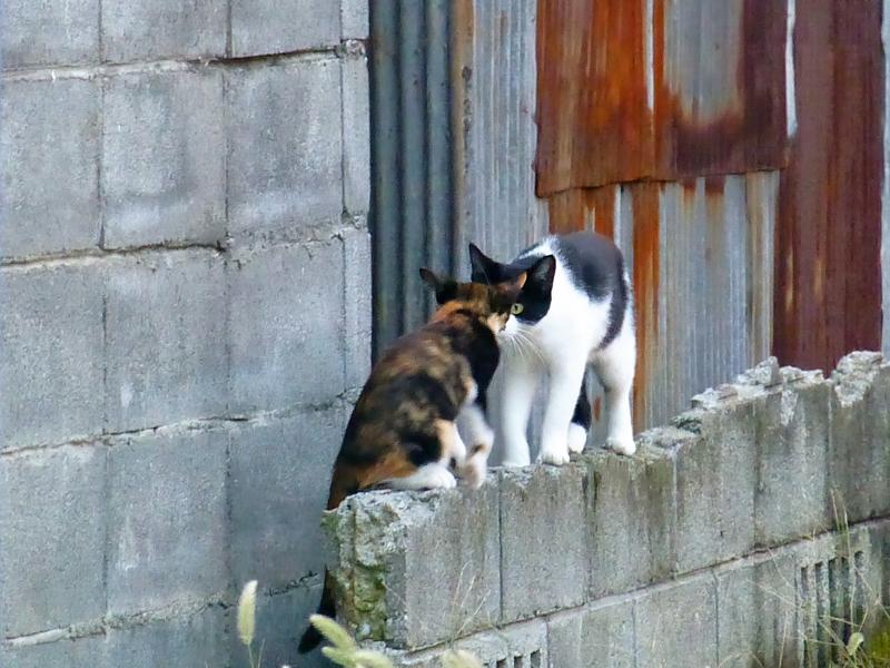空き地ブロック塀の猫たち1