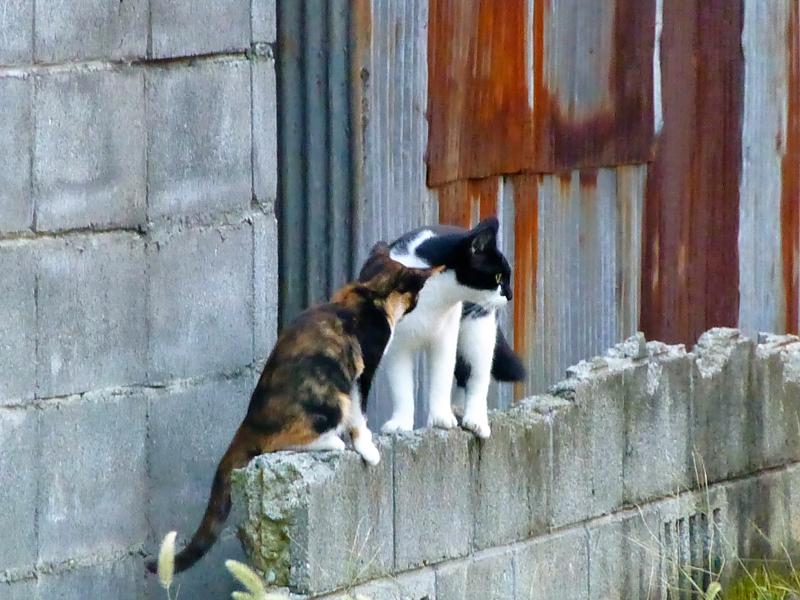 空き地ブロック塀の猫たち2