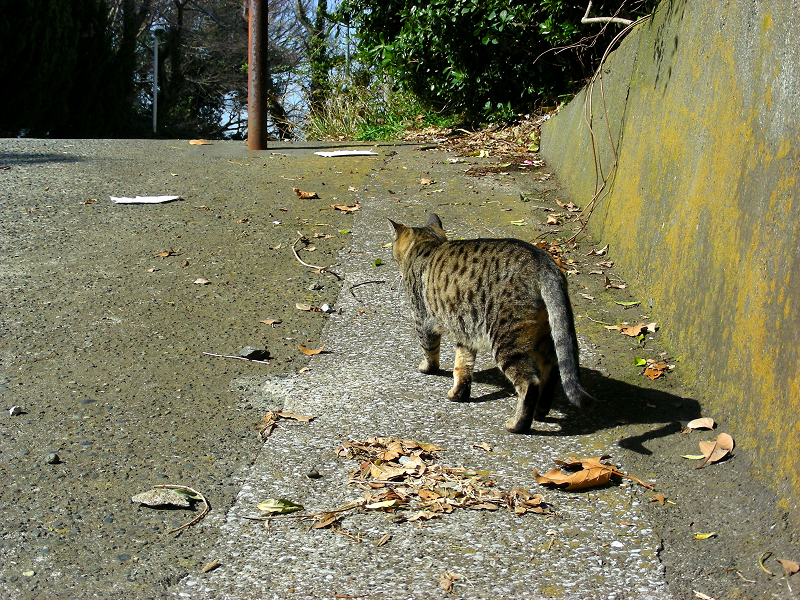 スロープを歩くキジトラ猫1