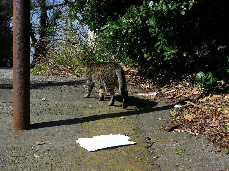 スロープを歩くキジトラ猫3
