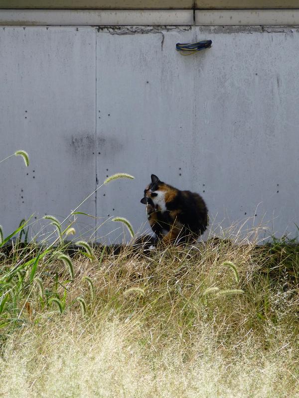 朝の街なか空き地の猫1