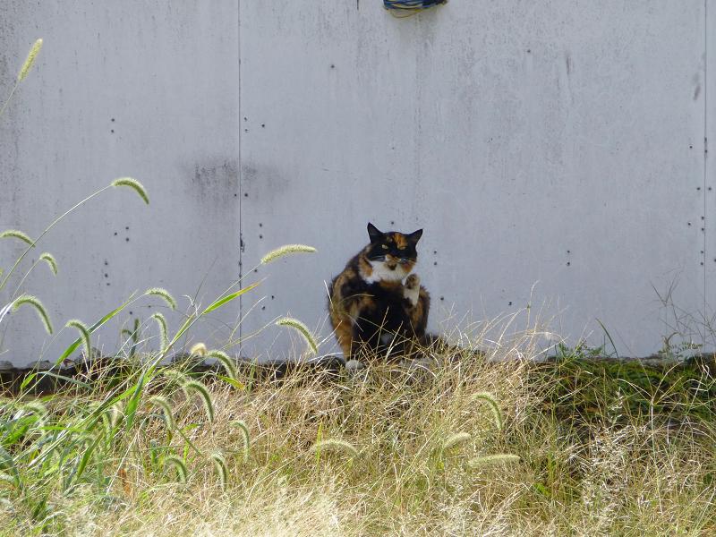 朝の街なか空き地の猫2