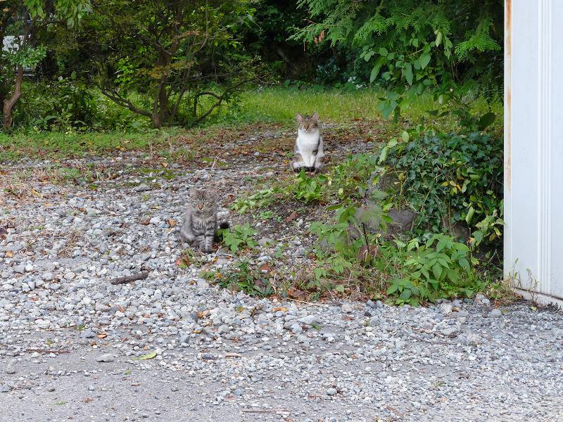 いつの間にか現れた猫たち1
