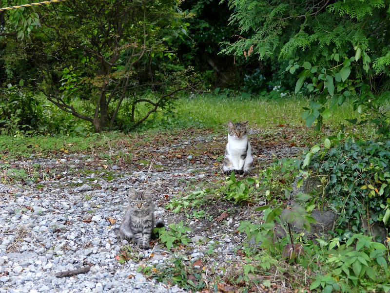 いつの間にか現れた猫たち2