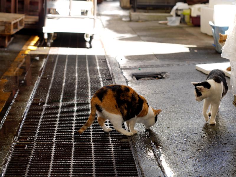 漁港の三毛猫と白黒猫1