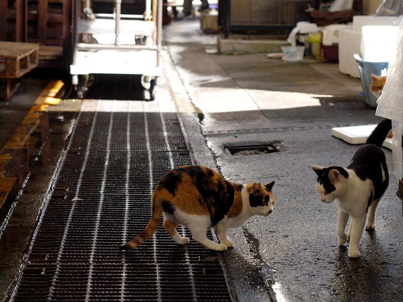 漁港の三毛猫と白黒猫2