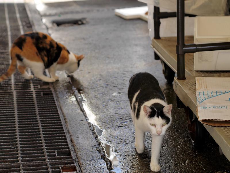 漁港の三毛猫と白黒猫3