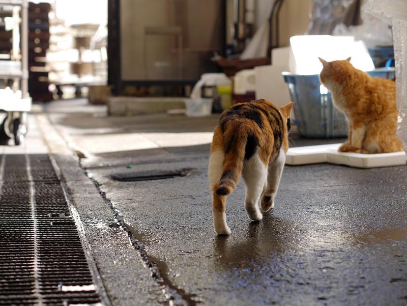 漁港の三毛猫と茶白猫1