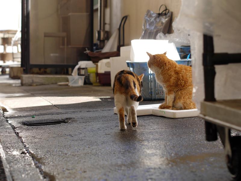 漁港の三毛猫と茶白猫2