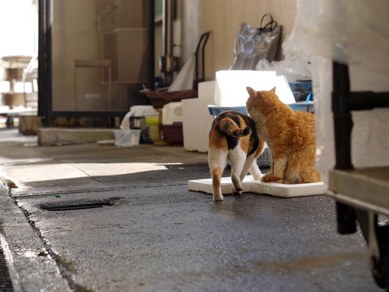 漁港の三毛猫と茶白猫3