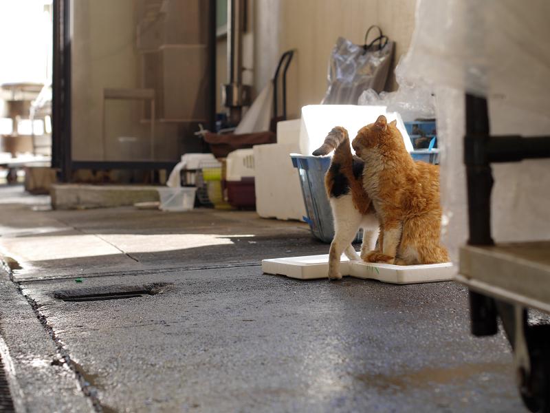 漁港の三毛猫と茶白猫4