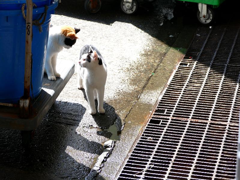 代車に乗った猫と叱られる猫2