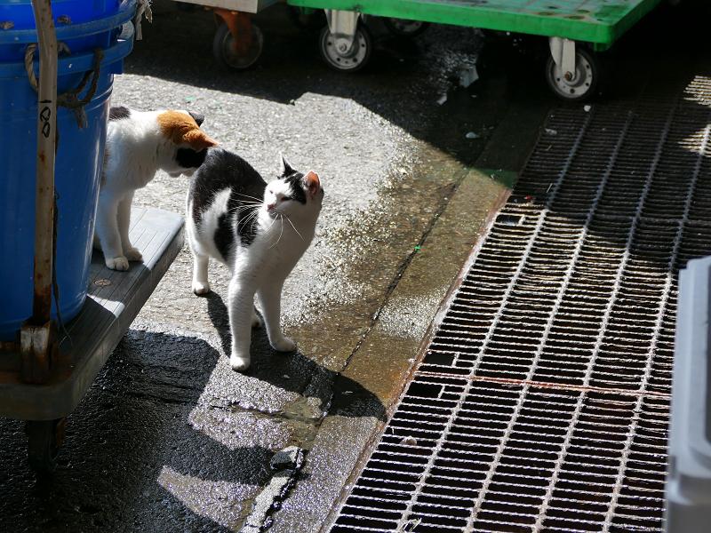 代車に乗った猫と叱られる猫3