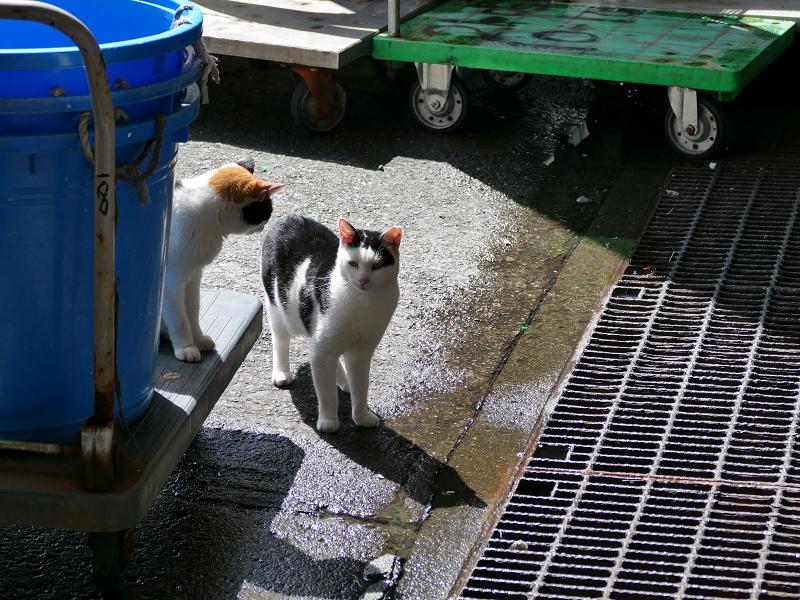 代車に乗った猫と叱られる猫4