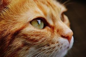 cat-1455468__340_convert_20160710210540.jpg