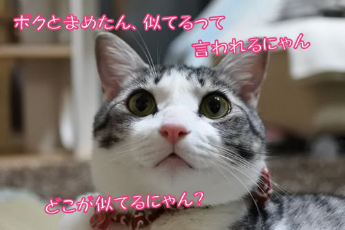 2DSC_2397.jpg