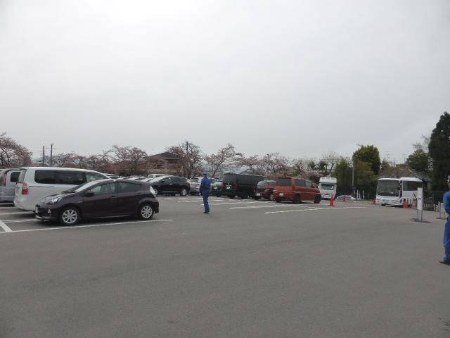 今更ですが仁和寺の御室桜を見に行ってました!